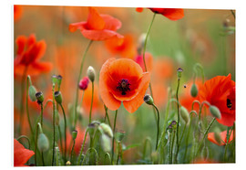 Foam board print  Poppies 21 - Nailia Schwarz