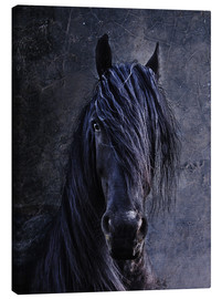 Canvas print  The Friesian - Joachim G. Pinkawa