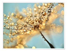 Premium poster  Dandelion umbrellas with gold drops - Julia Delgado