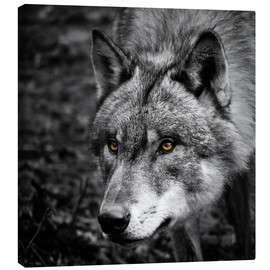 Canvas print  Wolf - Stephanie Wittenburg