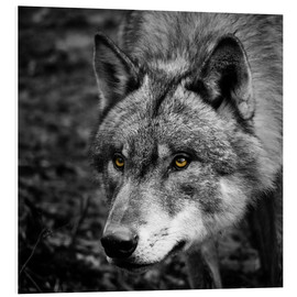 Foam board print  Wolf - Stephanie Wittenburg