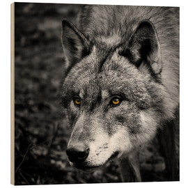 Wood print  Wolf - Stephanie Wittenburg