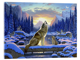 Acrylic print  Wolf learns the howling - Chris Hiett
