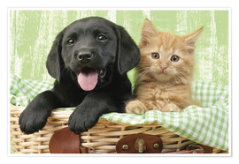 Premium poster Puppy and kitten in green gingham