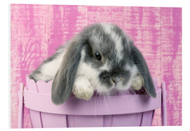 Foam board print  Rabbit in a flower pot - Greg Cuddiford