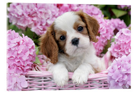 Acrylic print  Pup in Pink Flowers - Greg Cuddiford