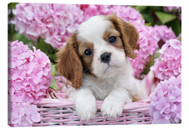 Canvas  Pup in Pink Flowers - Greg Cuddiford
