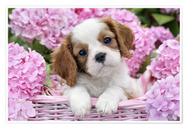 Premium poster  Pup in Pink Flowers - Greg Cuddiford