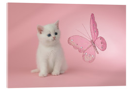 Acrylic print  Kitten with Pink Butterfly - Greg Cuddiford