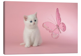 Canvas  Kitten with Pink Butterfly - Greg Cuddiford