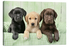 Canvas  Three Labradors - Greg Cuddiford