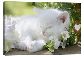 Canvas print  Kitten asleep in bushes - Greg Cuddiford