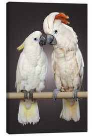 Canvas print  Cockatoo love - Greg Cuddiford