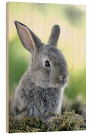 Wood print  Grey rabbit - Greg Cuddiford