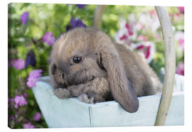 Canvas print  Rabbit in basket - Greg Cuddiford