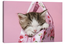 Canvas  Sleeping kitten in pink handbag - Greg Cuddiford