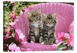 Canvas print  Tabby Kittens - Greg Cuddiford