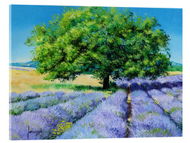Acrylic print  Tree and Lavenders - Jean-Marc Janiaczyk