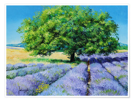 Premium poster Tree and Lavenders