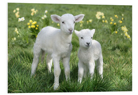 Foam board print  Easter lambs - Greg Cuddiford