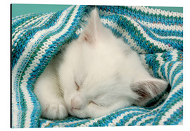 Aluminium print  White kitten sleeping under stripy blanket - Greg Cuddiford