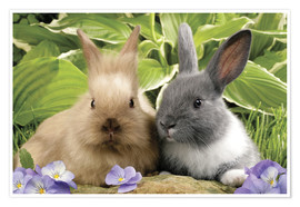 Premium poster  Brown and grey rabbit - Greg Cuddiford