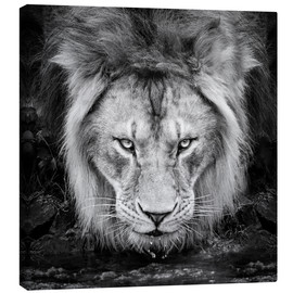 Canvas print  Intense look - Manuela Kulpa