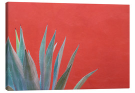 Canvas  Agave plant next to colorful wall - Don Paulson