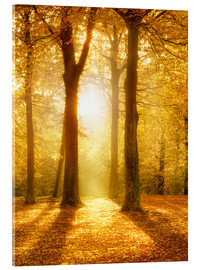Acrylic print  Golden autumn forest in sunlight - Jan Christopher Becke
