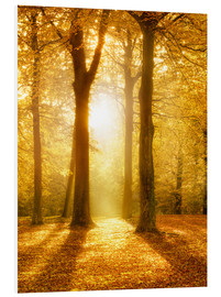 Foam board print  Golden autumn forest in sunlight - Jan Christopher Becke