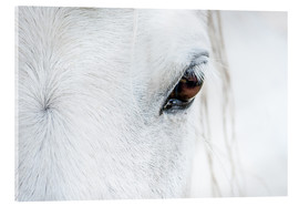 Acrylic glass  Eye of the horse - Andreas Kossmann