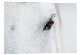Foam board print  Eye of the horse - Andreas Kossmann