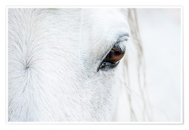 Premium poster Eye of the horse