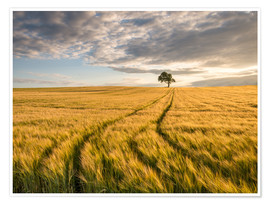 Premium poster  Lonely Tree in Field - Andreas Wonisch