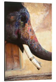 Aluminium print  Painted Indian elephant - Dave Bartruff