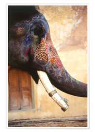 Premium poster  Painted Indian elephant - Dave Bartruff