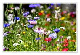 Poster  colorful flower meadow - Filtergrafia
