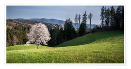 Premium poster  Blooming Apple Tree in Black Forest - Andreas Wonisch