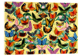 Acrylic print  Great diversity of butterflies - Kambili