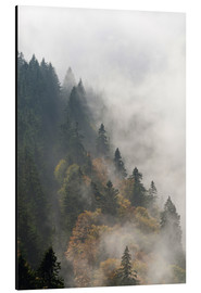 Aluminium print  Cloud forest - Michael Valjak