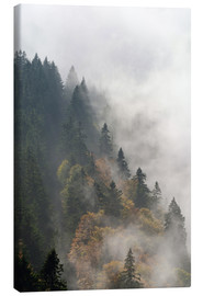 Canvas print  Cloud forest - Michael Valjak