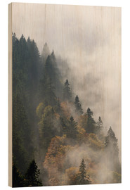 Wood print  Cloud forest - Michael Valjak