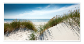 Premium poster  Dune with fine shining marram grass - Reiner Würz