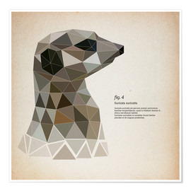 Premium poster fig4 Polygon meerkat  square