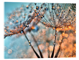 Acrylic glass  Dandelion reflections - Julia Delgado