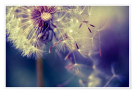 Premium poster  Dandelion with flying umbrella - Julia Delgado