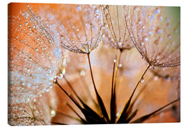 Canvas print  Dandelion orange light - Julia Delgado