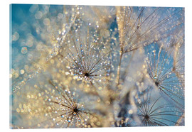 Acrylic print  Dandelion Golden Dream - Julia Delgado