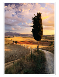 Premium poster  Evening in the Val d'Orcia, Tuscany - Matteo Colombo