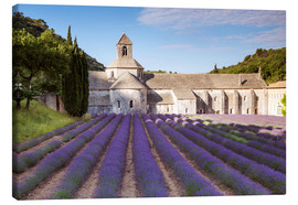 Canvas print  Senanque abbey, Provence - Matteo Colombo